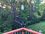 Cantilevered Bird Feeder